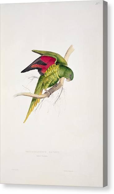 Parakeets Canvas Print - Matons Parakeet by Edward Lear