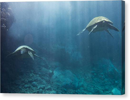 Maui Sea Turtles Farewell Canvas Print