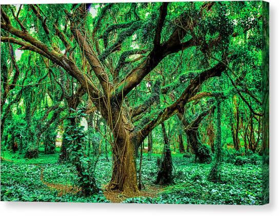 Maui Tree Canvas Print