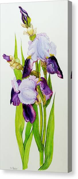 In Bloom Canvas Print - Mauve And Purple Irises With Two Buds  by Joan Thewsey