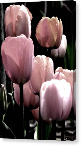 Mauve In The Morning Canvas Print