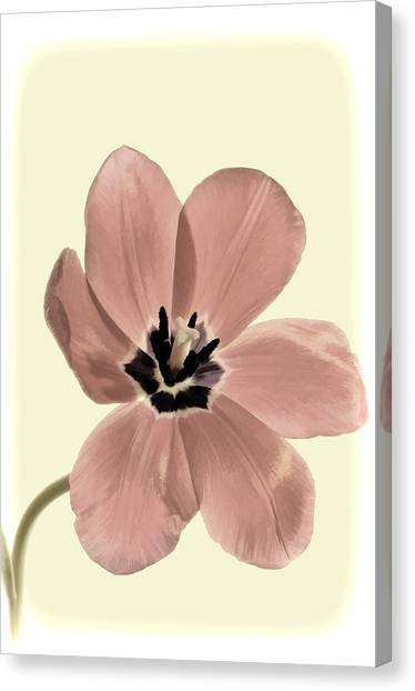 Mauve Tulip Transparency Canvas Print