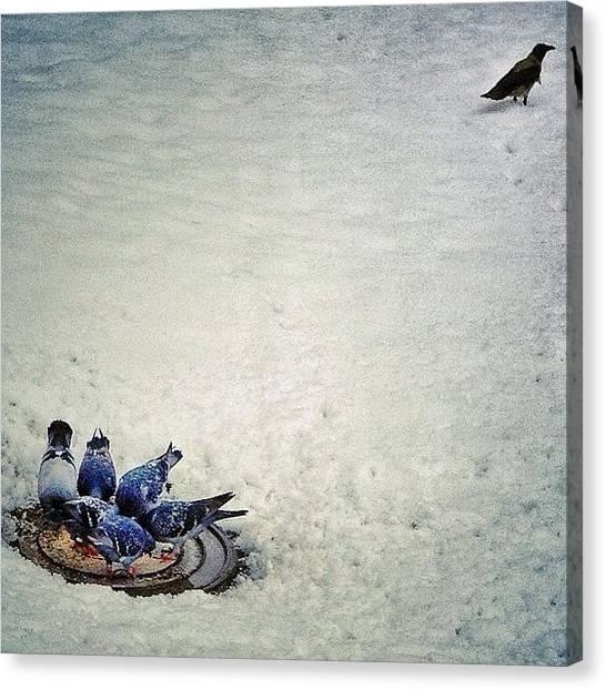 Dove Canvas Print - Maverick by Levshinamarlen LEVSHINA
