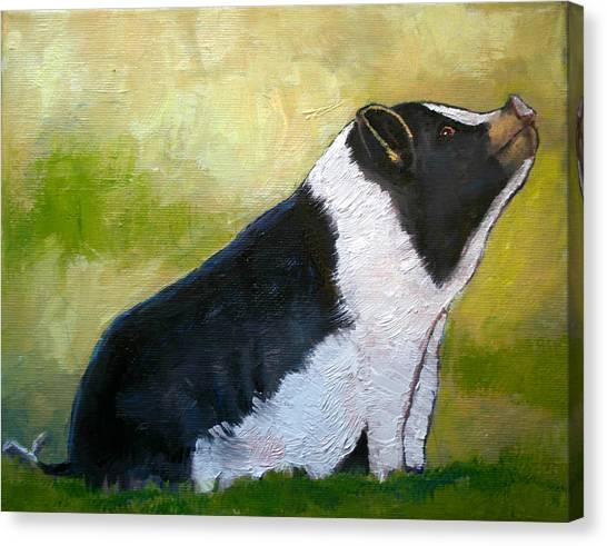 Max The Pig Canvas Print