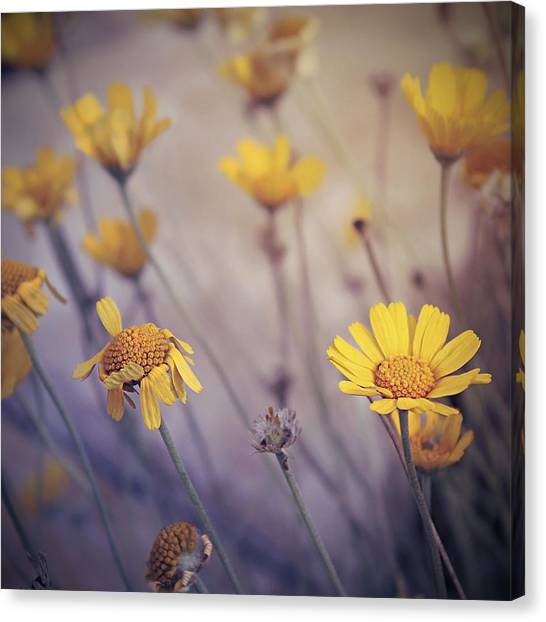May Daze Canvas Print