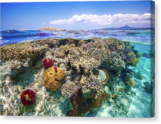 Snorkling Canvas Print - Mayotte : The Reef by Barathieu Gabriel