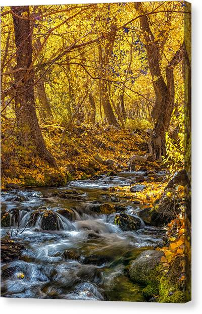 Mcgee Creek Canvas Print