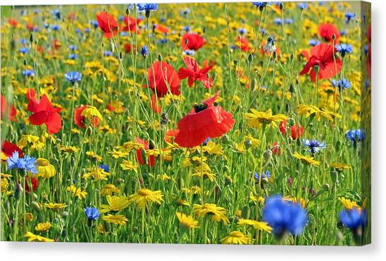 Meadow Flora Canvas Print