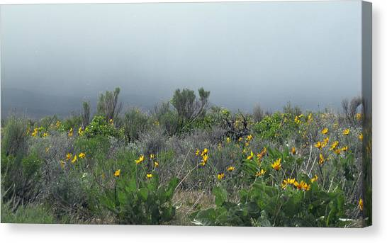 Meadow Fog Canvas Print