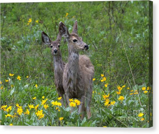 White-tailed Deer Canvas Print - Meadow Meal by Mike  Dawson