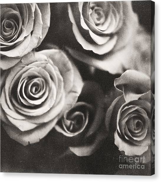 Medium Format Analog Black And White Photo Of White Rose Flowers Canvas Print by Edward Olive