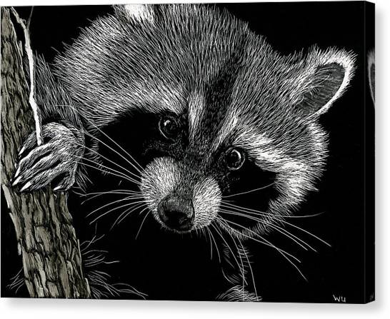 Meeko Canvas Print
