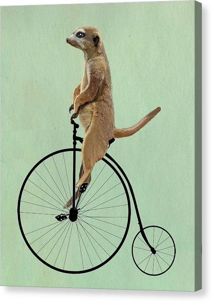 Meerkats Canvas Print - Meerkat On A Black Penny Farthing by Kelly McLaughlan