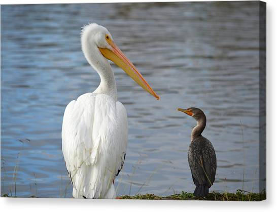 Meeting Of Beaks Canvas Print