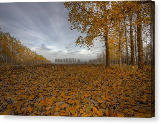 Autumn Leaves Canvas Print - Melancholy Day by Radiga