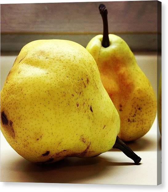 Pears Canvas Print - Mellow Yellow by Judi FitzPatrick
