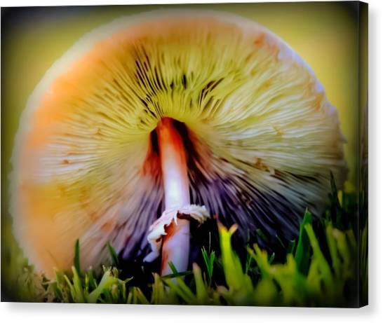 Shrooms Canvas Print - Mellow Yellow Mushroom by Karen Wiles