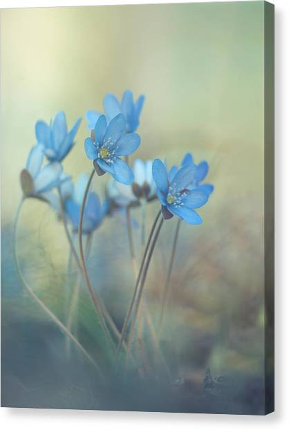 Summer Flowers Canvas Print - Memories Of A Spring by Davis Zandersons