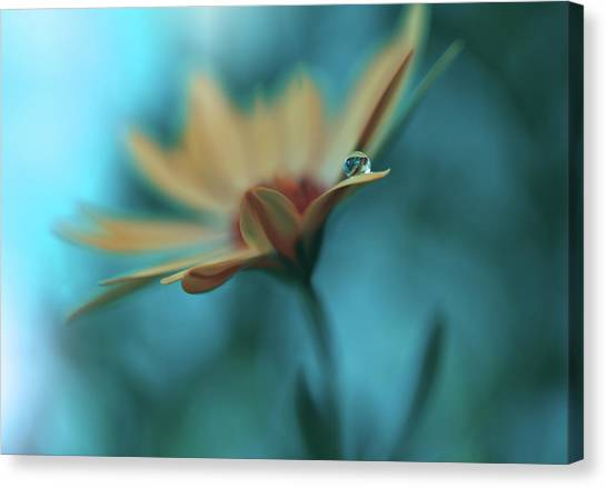 Memories Of Sea... Canvas Print by Juliana Nan