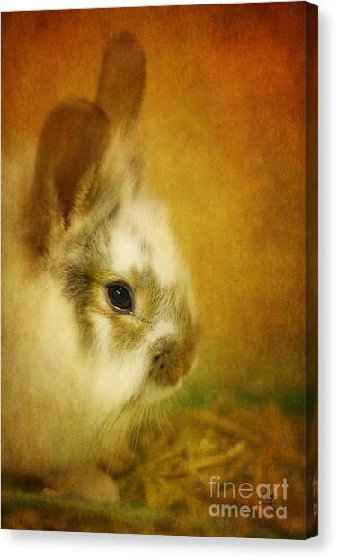 Easter Bunny Canvas Print - Memories Of Watership Down by Lois Bryan