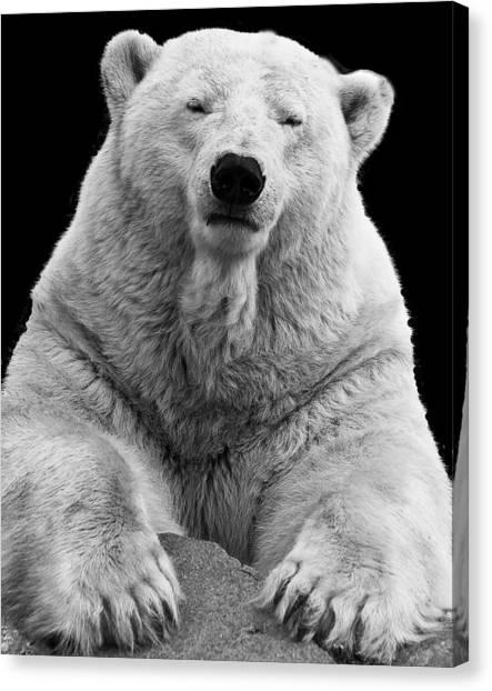 Mercedes The Polar Bear Canvas Print
