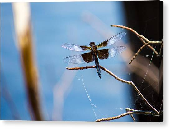 Merrill Creek Dragonfly Canvas Print