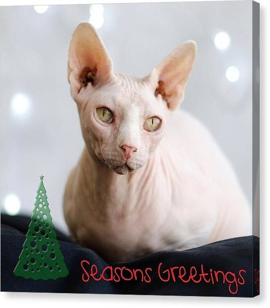 Sphynx Cats Canvas Print - Merry Christmas And All That Jazz From by Samantha Charity Hall