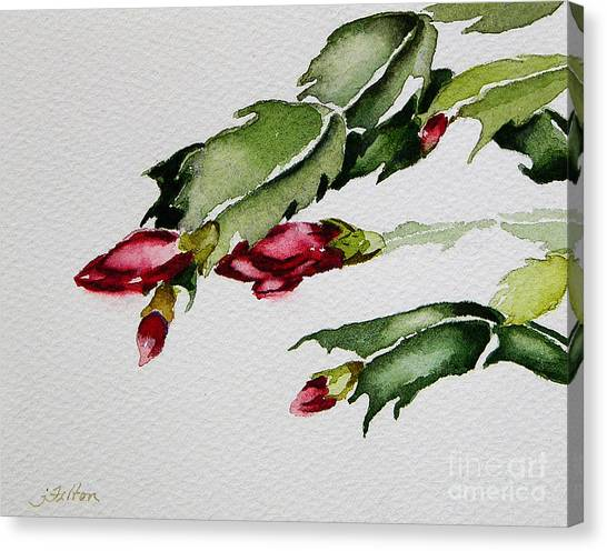 Merry Christmas Cactus 2013 Canvas Print