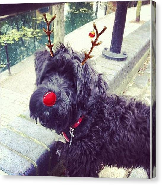 Schnauzers Canvas Print - Merry Christmas Everyone! #ozzie by Laurena Pascoe