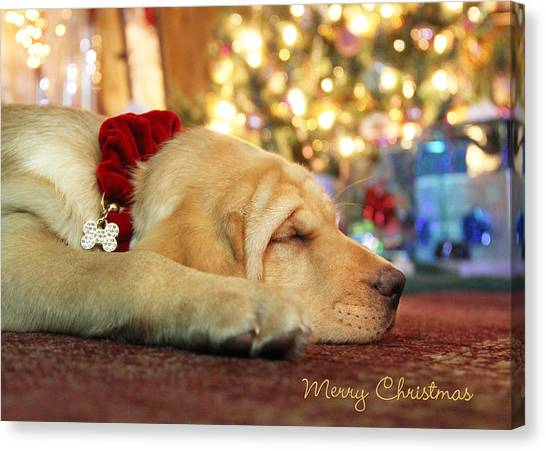 Yellow Lab Canvas Print - Merry Christmas From Lily by Lori Deiter