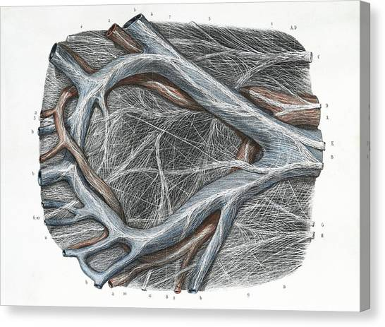 Abdomen Canvas Print - Mesocolon by Science Photo Library