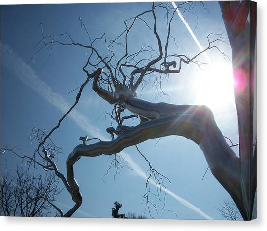 Washington Nationals Canvas Print - Metal Tree by Rebecca Kowalczik