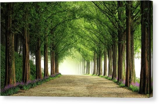 South Asia Canvas Print - Metasequoia Road by Tiger Seo
