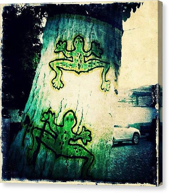 Frogs Canvas Print - Mexican Graffiti Tree Frogs (puerto by Natasha Marco