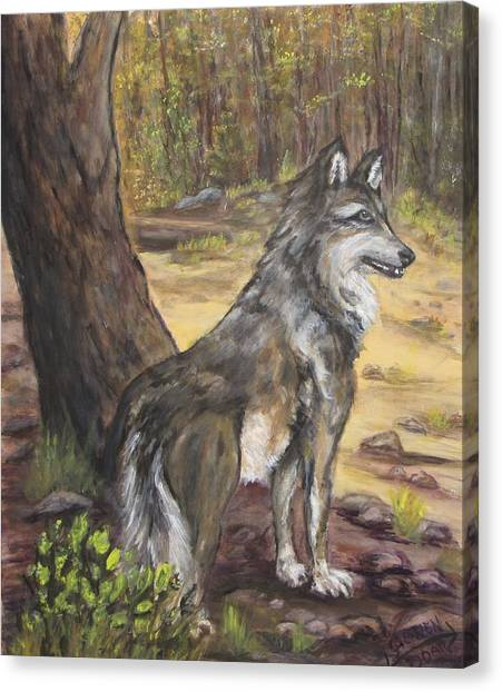 Mexican Gray Wolf Canvas Print by Caroline Owen-Doar