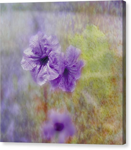 Mexican Petunia Canvas Print