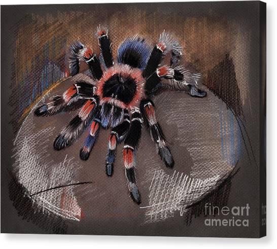 Mexican Redknee Tarantula Canvas Print