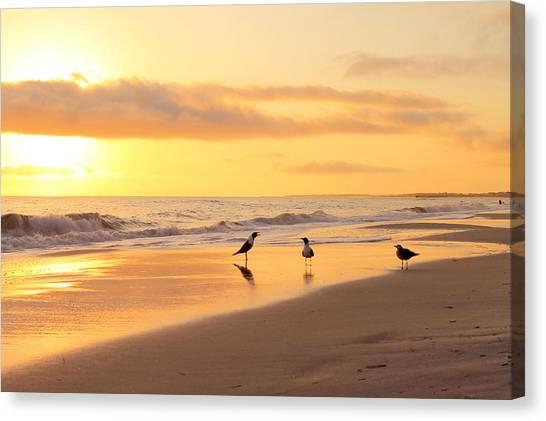 Mexico Beach Sand Pipers Canvas Print