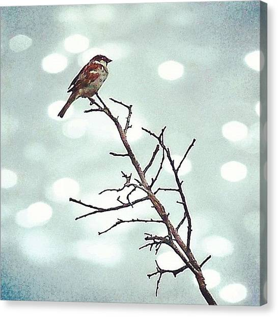 Animal Canvas Print - #mgmarts #bird #nature #life #bestpic by Marianna Mills