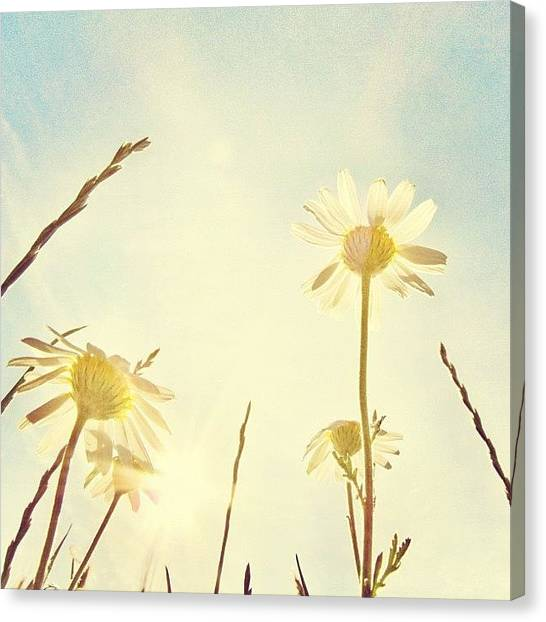 Sky Canvas Print - #mgmarts #daisy #all_shots #dreamy by Marianna Mills