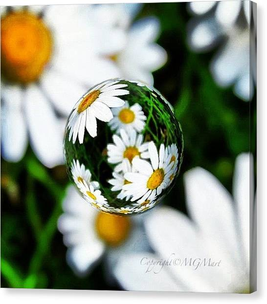 Green Canvas Print - #mgmarts #daisy #flower #weed #summer by Marianna Mills