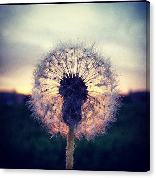 Sunset Canvas Print - #mgmarts #dandelion #sunset #simple by Marianna Mills