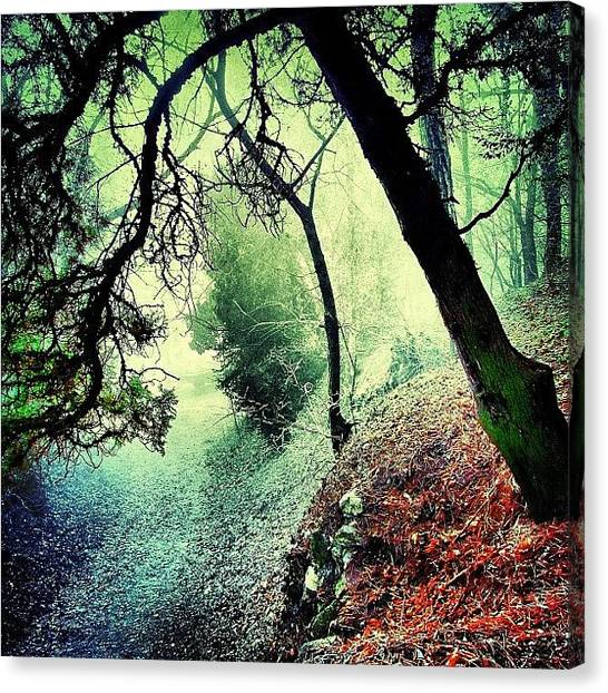 Forests Canvas Print - #mgmarts #nature #fog #visionary by Marianna Mills