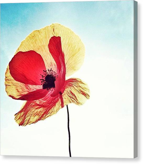 Social Canvas Print - #mgmarts #poppy #nature #red #hungary by Marianna Mills