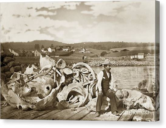 Michael Noon Sitting On A  Pile Of Whale Bones Monterey Wharf  Circa 1896 Canvas Print