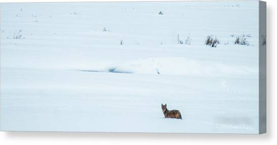Phoenix Coyotes Canvas Print - Michigan Coyotee  by Optical Playground By MP Ray