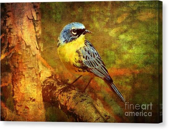 Warblers Canvas Print - Michigans Rare Kirtlands Warbler by Lianne Schneider