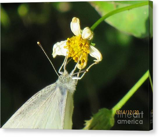 Micro Photography Canvas Print