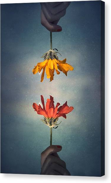 Flower Canvas Print - Middle Ground by Tara Turner