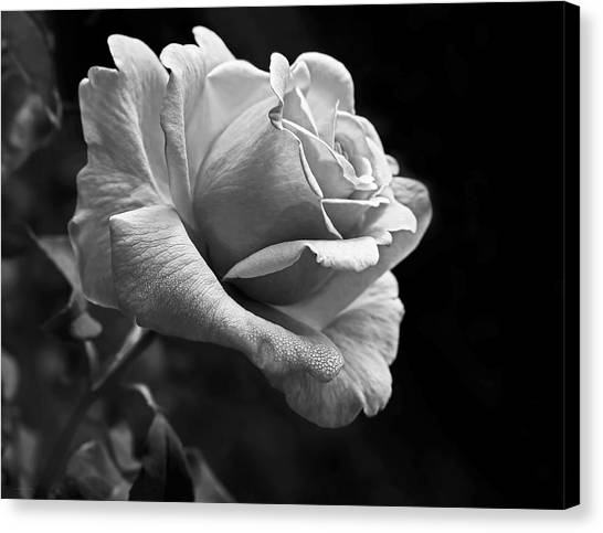 Midnight Rose In Black And White Canvas Print